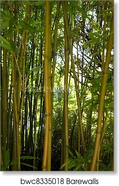 japanese bamboo trees art