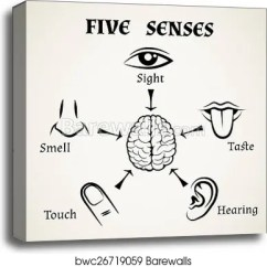 Five Senses Diagram Ford Transit Wiring 2002 Icons Canvas Print Barewalls Posters Prints