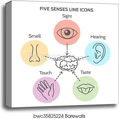 five senses diagram 2002 jetta monsoon radio wiring canvas print of line icons barewalls posters prints