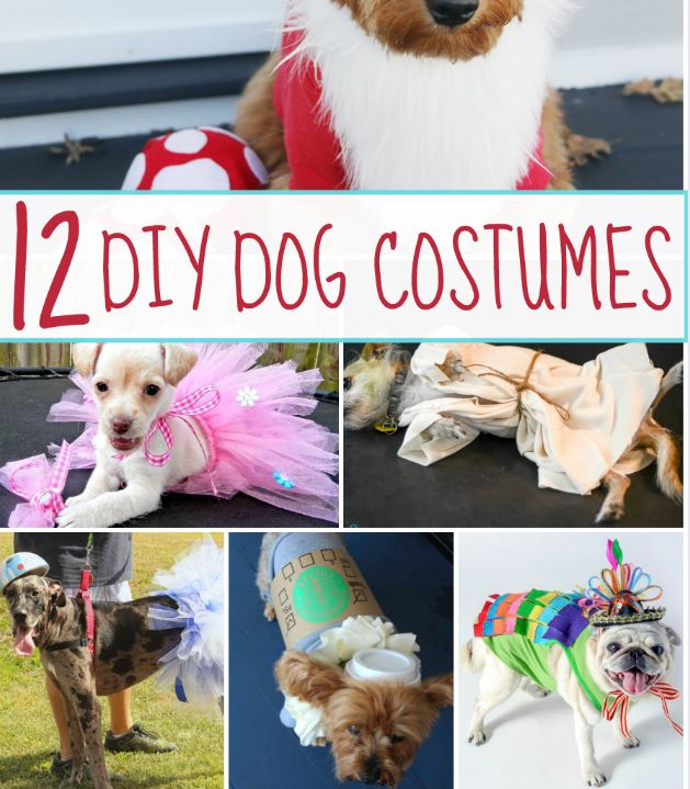 12 Do It Yourself Dog Costumes!