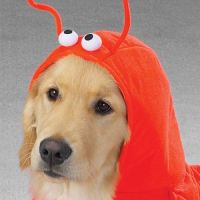 Lobster Dog Costume | Bark Avenue Dog Boutique