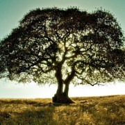 Estate Planning Checklist - A tree in a field