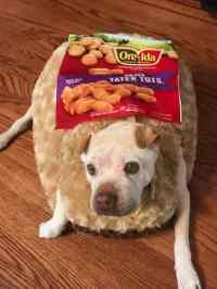 Funny Dogs Dressed in Costumes! Who is Potato?