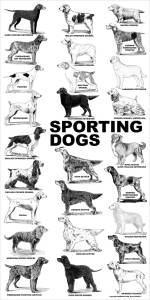 aaronco_sporting_dogs