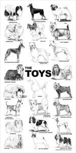 aaronco_the_toys