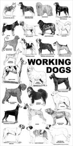aaronco_working_dogs