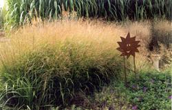 grass blast 10