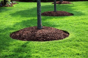 massachusetts bark mulch topsoil