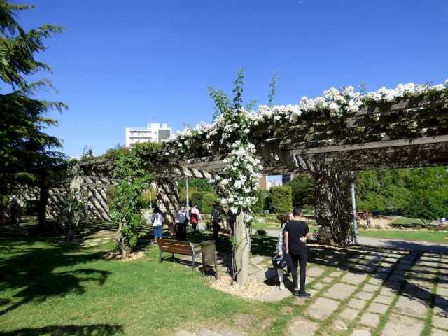 Detalle de las pérgolas llenas de rosas blancas