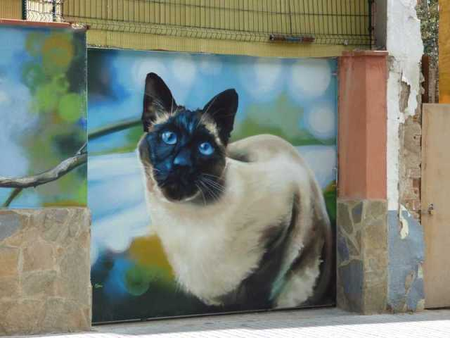 Gato sentado mirando fijamente con sus ojos azules