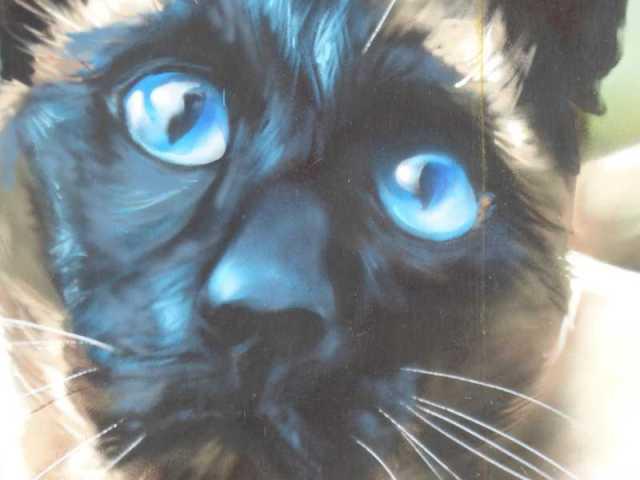 Primer plano de los ojos azules. Precioso.