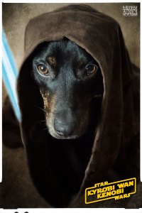 The gallery for --> Jedi Dogs