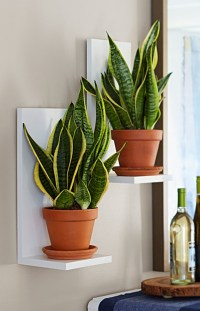 40 Changing Indoor Plant Decoration Ideas