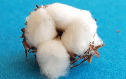 difference between polyester and cotton