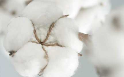 biodegradable cotton