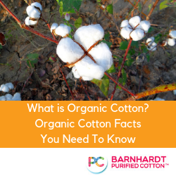 What is Organic Cotton? Organic Cotton Facts You Need To Know