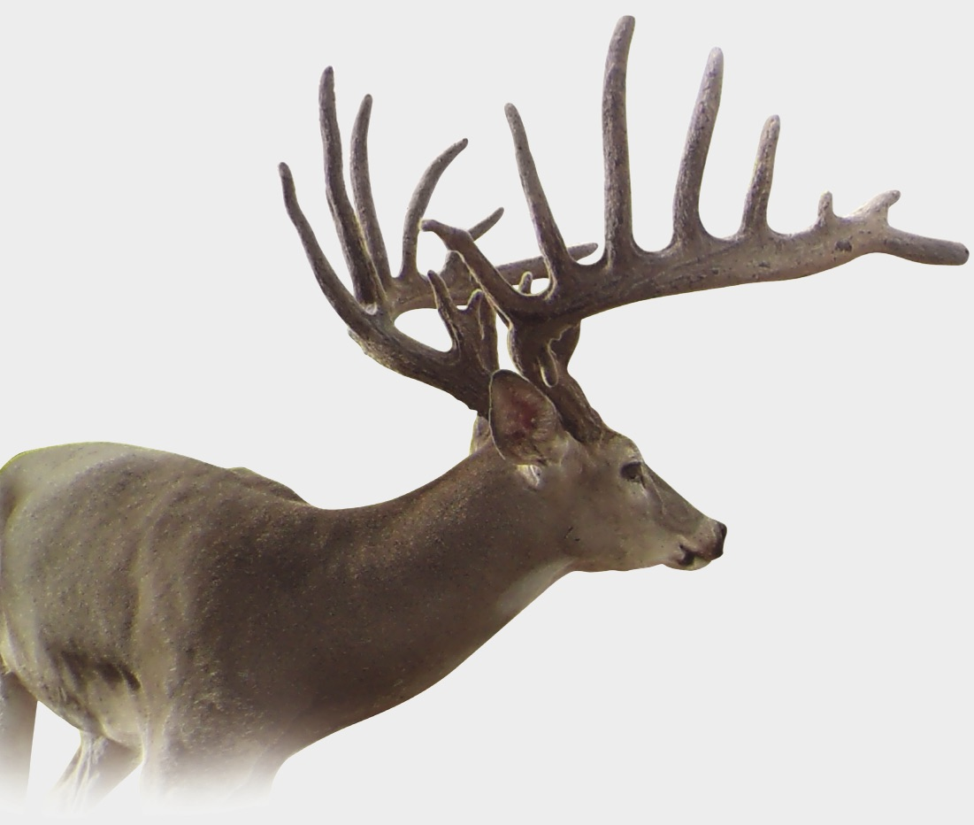 Image Result For Antler Home Decor