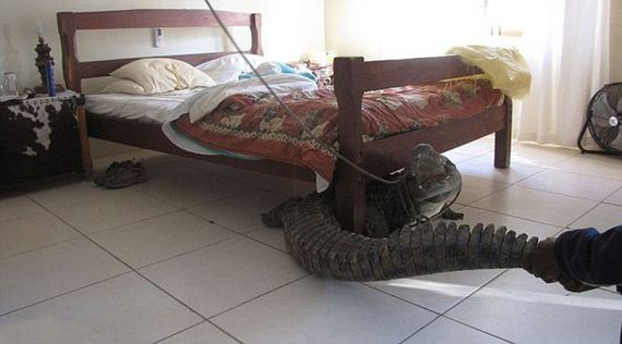 Crocodile Under the Bed  Barnorama