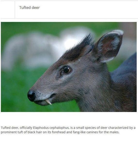 Strange Animals You Wont Believe Exist  Barnorama