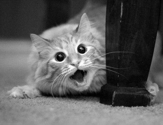 Astonished Animals Who Are Freaked Out By Whats Happening  Barnorama