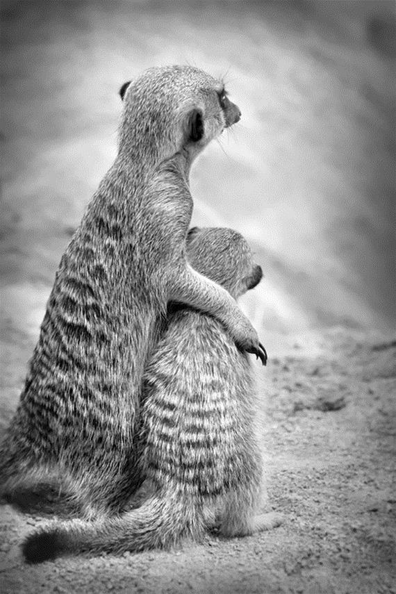 Unusual Girls Wallpaper Animals Demonstrating Why A Mother S Love Is So Special
