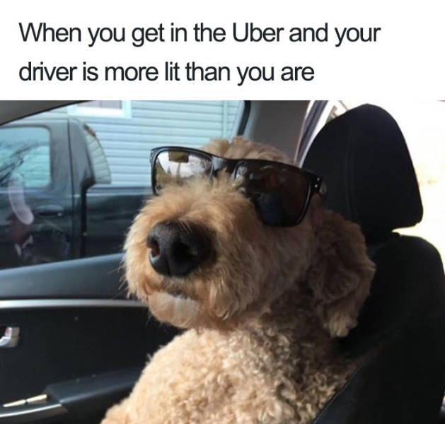 Uber Rides Can Only Be Described With Animal Memes  Barnorama