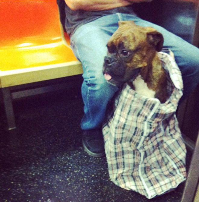 New York City Subway Banned Dogs Unless They Fit In a Bag