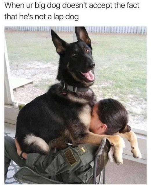 34 Funny Dog Memes  Barnorama