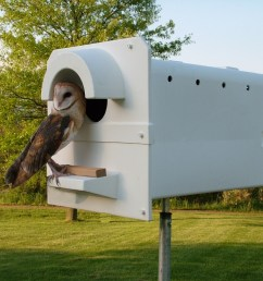 the molded plastic heat resistant barn owl box is now being sold in australia [ 1024 x 768 Pixel ]