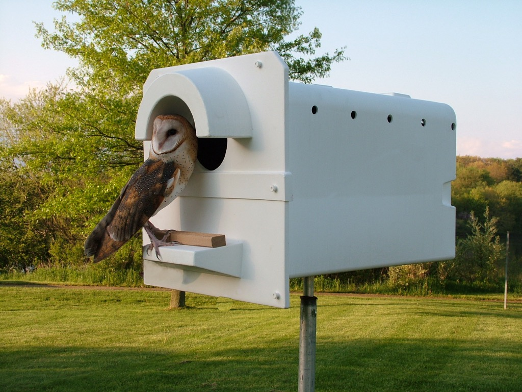 hight resolution of the molded plastic heat resistant barn owl box is now being sold in australia