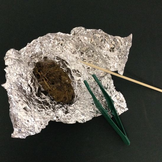 Owl Pellet Dissection Pack The Barn Owl Trust