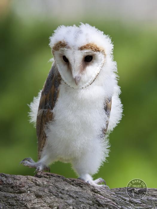 Owlet Kids Club  The Barn Owl Trust