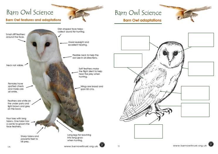 barn owl diagram car radio wiring colouring pages - the trust