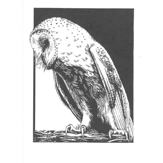 Black And White Barn Owl Cards 8 Designs