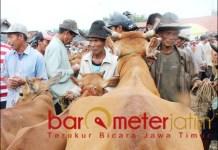 POLEMIK POPULASI SAPI: Pedagang sapi di pasar tradisional Tanah Merah Bangkalan. | Foto: Barometerjatim.com/ROY HS