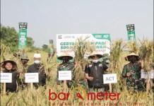MULAI TUAI HASIL: Panen raya pengelolaan wakaf sawah produktif Aksi Cepat Tanggap (ACT) di Mojokerto. | Foto: Barometerjatim/com/ACT