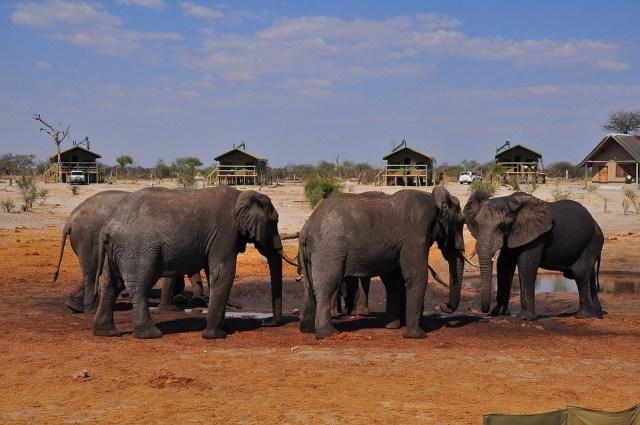 voyage safari au Botswana avec un bébé