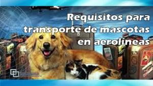 Requisitos para transporte de mascotas en aerolíneas en periodos vacacionales