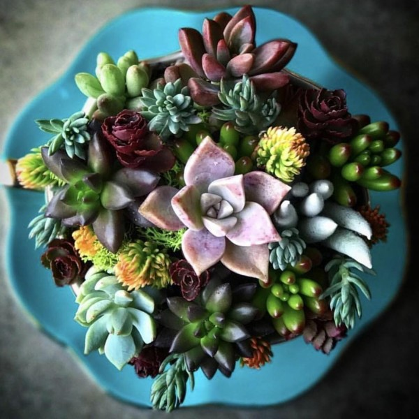 Succulent Teacup Workshop  Barrels  Branches Nursery