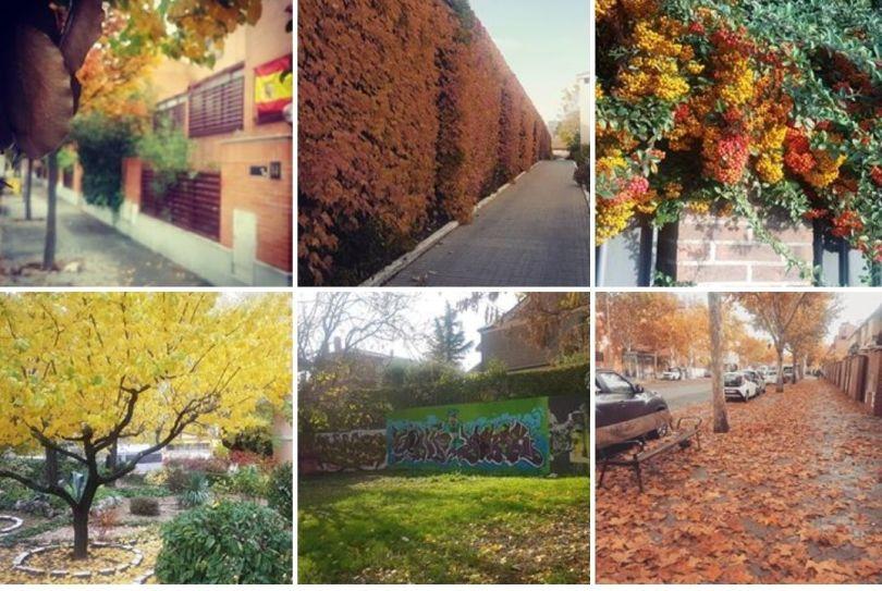 barrio salvador otoño