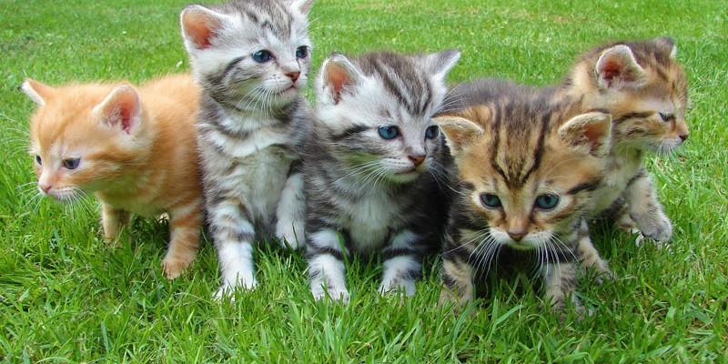 kittens 555822