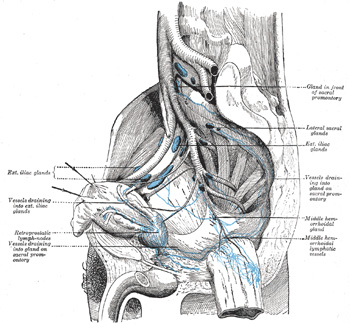 VIII. The Lymphatic System. 6. The Lymphatics of the