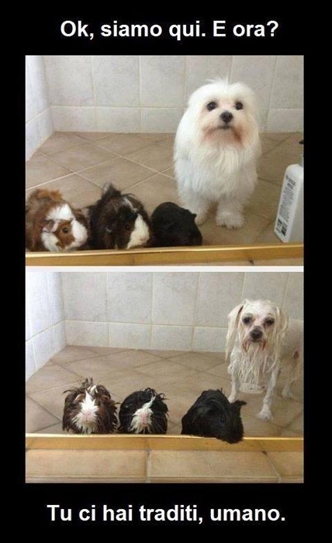 Barzellettenet Foto Animali prima e dopo il bagno