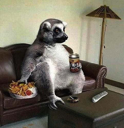 Barzellettenet Foto Lemure in relax