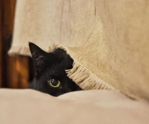 #Inqui is watching you… #instacat #BlackCat #DSLR