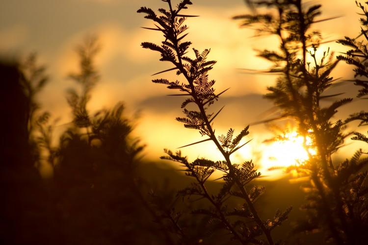 rustgevende afbeelding van een paar twijgen tegen een ondergaande zon