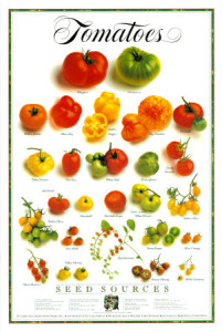 Kinds of tomatoes