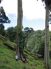 Bomen, te groot voor de foto