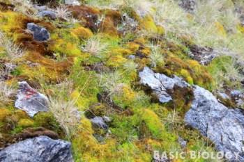Moss field