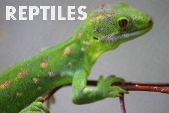 Reptiles - Basic Biology